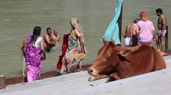 Indian people at ritual washing in the sacred Ganges River. Rishikesh, India Stock Footage