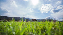 Green and blue sky nature with two horse 4K Stock Footage