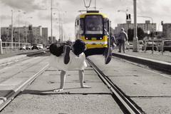 Young guy dancing breakdance on tramlines in the city - stock photo