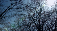 Winter branches, 4k color graded (4000x2160) Stock Footage