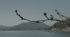 Bud before spring, 4k  non color graded (4000x2160) Stock Footage