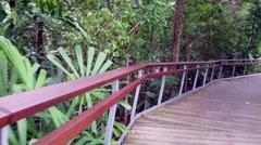 4k UHD video of Berlayer Creek mangrove trail and boardwalk, Singapore Stock Footage