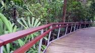 Stock Video Footage of 4k UHD video of Berlayer Creek mangrove trail and boardwalk, Singapore