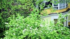 Dpi in flowering Apple trees in the rain. Stock Footage