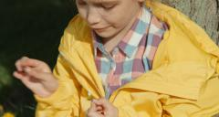 Closeup portrait girl tearing off petals of a daisy - stock footage