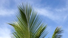 Close up coconut leaves with blue sky background Stock Footage