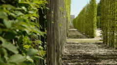Tree galleries at Versailles garden. France Stock Footage