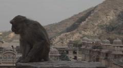 Monkey temple, jaipur Stock Footage