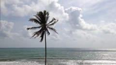 Stock Video Footage of Coconut tree with strong wind and blue sky