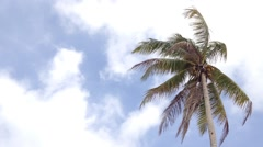 Coconut tree with strong wind and blue sky - stock footage