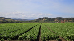 California Farmland Stock Video Stock Footage
