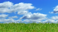 Green Grass with Time Lapse Sky, Panning Left to Right - stock footage