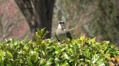 Bird Chirping near waterfall Washington DC Stock Footage