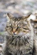 alley cat sitting on the ground - stock photo