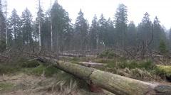 4k Tree trunks and logs pan rainy season Harz forest - stock footage