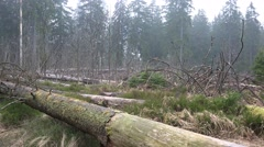 4k Tree trunks and logs closeup rainy season Harz forest - stock footage