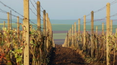 Vineyard in Early Spring Stock Footage