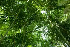 Under fern canopy closeup Stock Photos