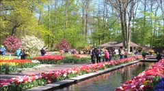 Keukenhof show gardens Stock Footage