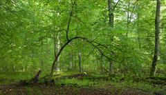 Summertime lush foliage of deciduous stand - stock photo