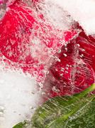 aromatic organic red abstraction - stock photo