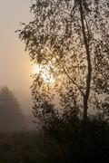 Birch tree in misty morning against sun sphere - stock photo