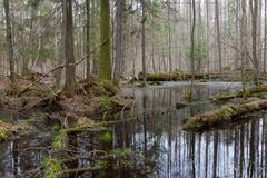 Springtime wet mixed forest with standing water - stock photo