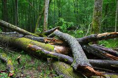 Broken ash tree branch moss wrapped - stock photo