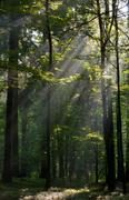 Sunbeam entering rich deciduous forest - stock photo