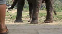 View of elephants legs. Stock Footage