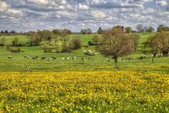 Yellow Flowers in a field Stock Photos