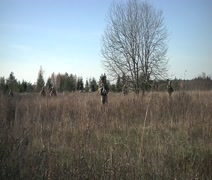 Squad Training exercises by the 2nd Cavalry Regiment in Estonia Stock Footage