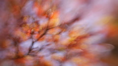 Wonderful autumn nature out of focus background with foliage like blaze. - stock footage