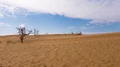 Desert sand dunes Stock Footage