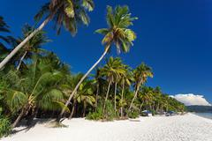 Coconut palm trees on tropical beach, Boracay Kuvituskuvat