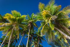 Coconut palm trees on blue sky background, Boracay Stock Photos