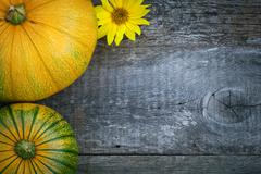 Freshly picked pumpkins with sun flower Stock Photos