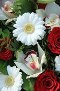 Cymbidium orchids, red roses and white gerberas Stock Photos