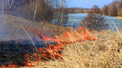 Forest fire: the burning last year's dry grass against the wood Stock Footage