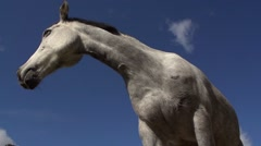 Grey horse portrait.Low angle Stock Footage