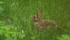 Bunny munching spring 6 Stock Footage