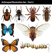 Arthropods Stock Illustration