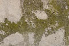 Detail of bark in plane tree, Platanus acerifolia Stock Photos
