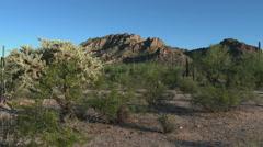 Sonoran desert scenic mountain - pan to saguaro cactus - stock footage