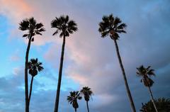 Stock Photo of Palm Tree Silhouette