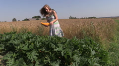 Pregnant peasant woman in dress harvest ripe courgette vegetable Stock Footage