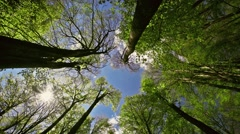 Forest in great weather, high angle view - stock footage