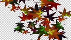 Source Leaves autumn colors (Alpha channel) Stock Footage