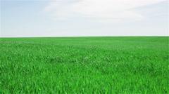 green field - stock footage