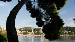 Tree near the water front in Cavtat Croatia Stock Footage
